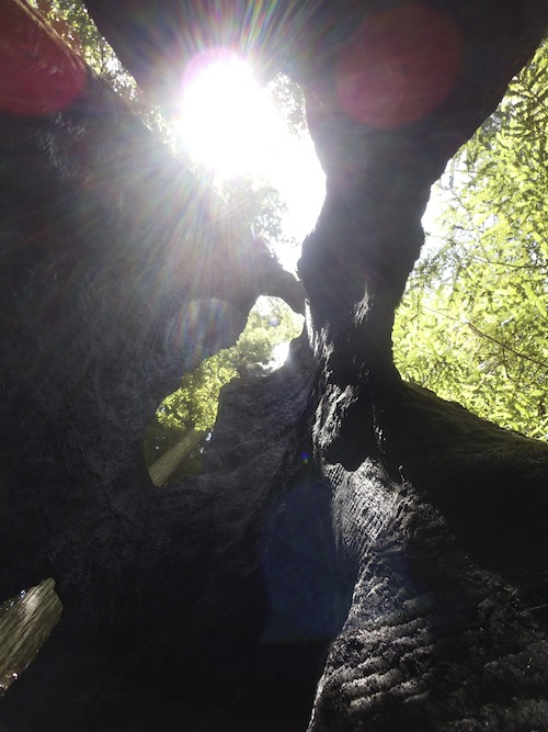 Finding perspective in the hollow of a tree